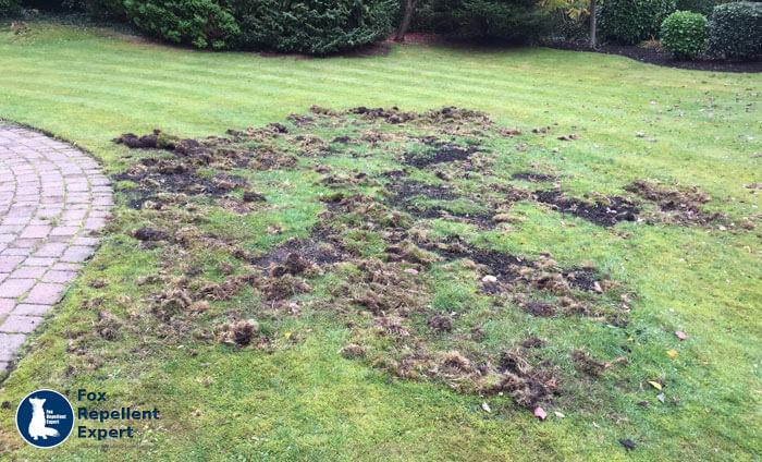 How Do I Get Rid Of Badgers In My Garden - Garden Ftempo